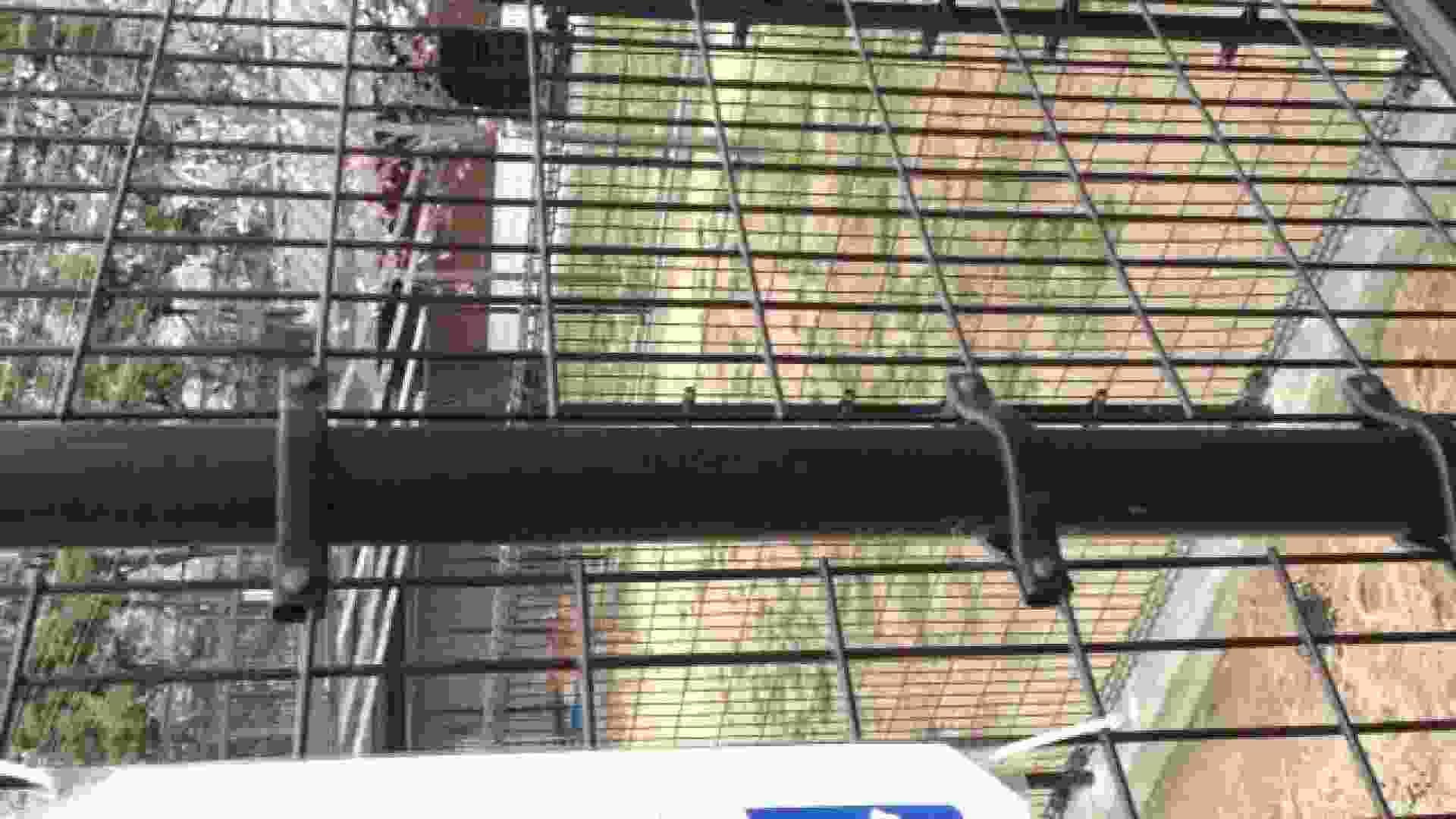 23(19日目)桜を見ながらお散歩 覗き すけべAV動画紹介 61PIX 18
